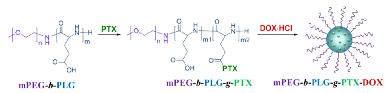 A co-delivery system based on paclitaxel grafted mPEG-b-PLG loaded with doxorubicin: Preparation, in vitro and in vivo evaluation