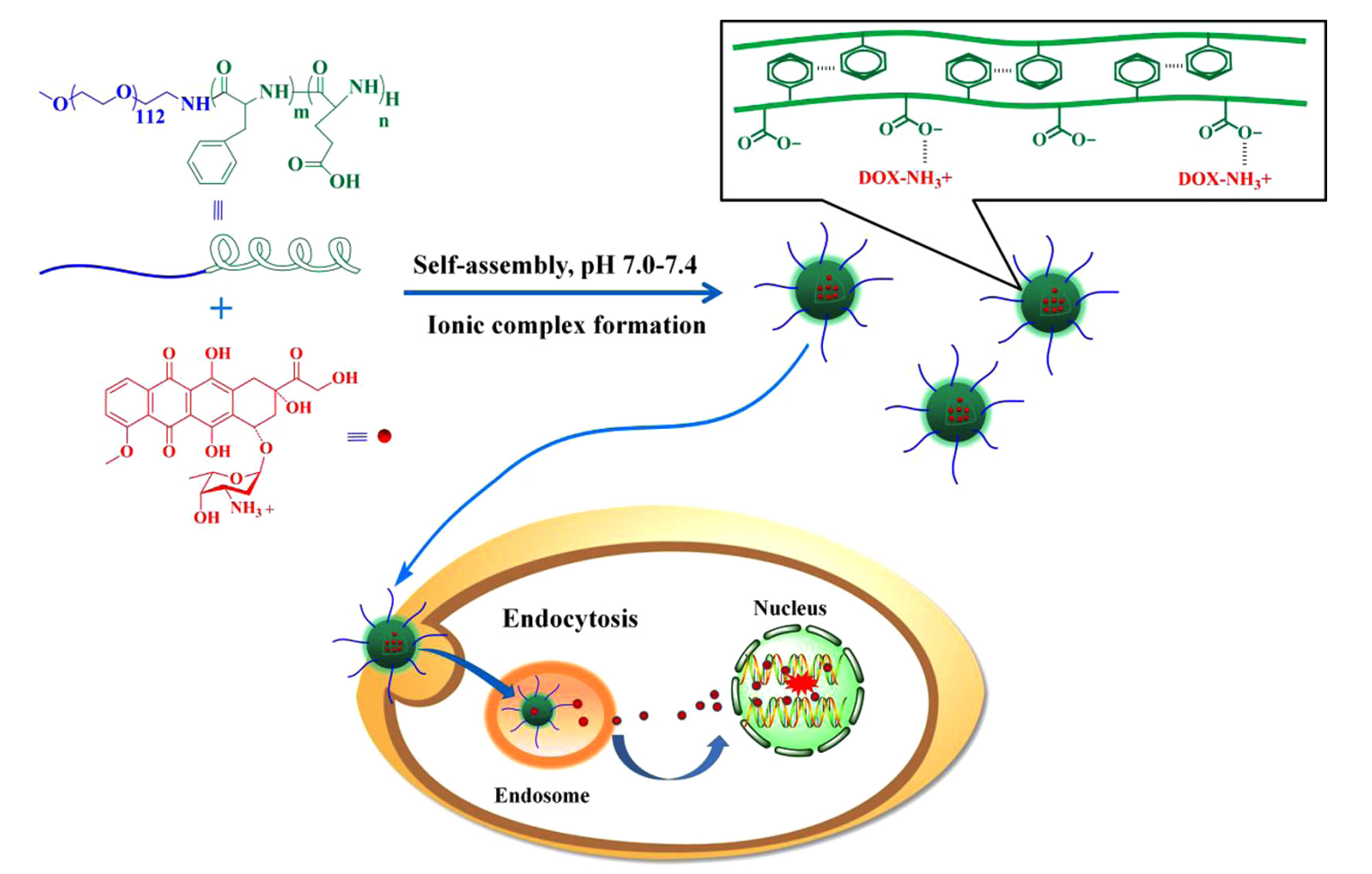 Doxorubicin-loaded amphiphilic polypeptide-based nanoparticles as an efficient drug delivery system for cancer therapy