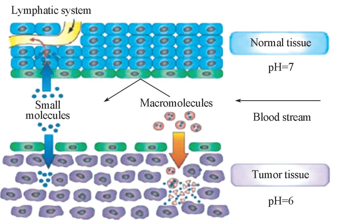 肿瘤靶向性高分子纳米载体研究现状与展望