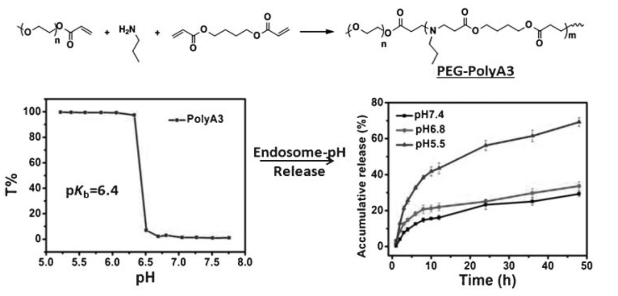 Tunable pH-Sensitive Poly(b-amino ester)s Synthesized from Primary Amines and Diacrylates for Intracellular Drug Delivery
