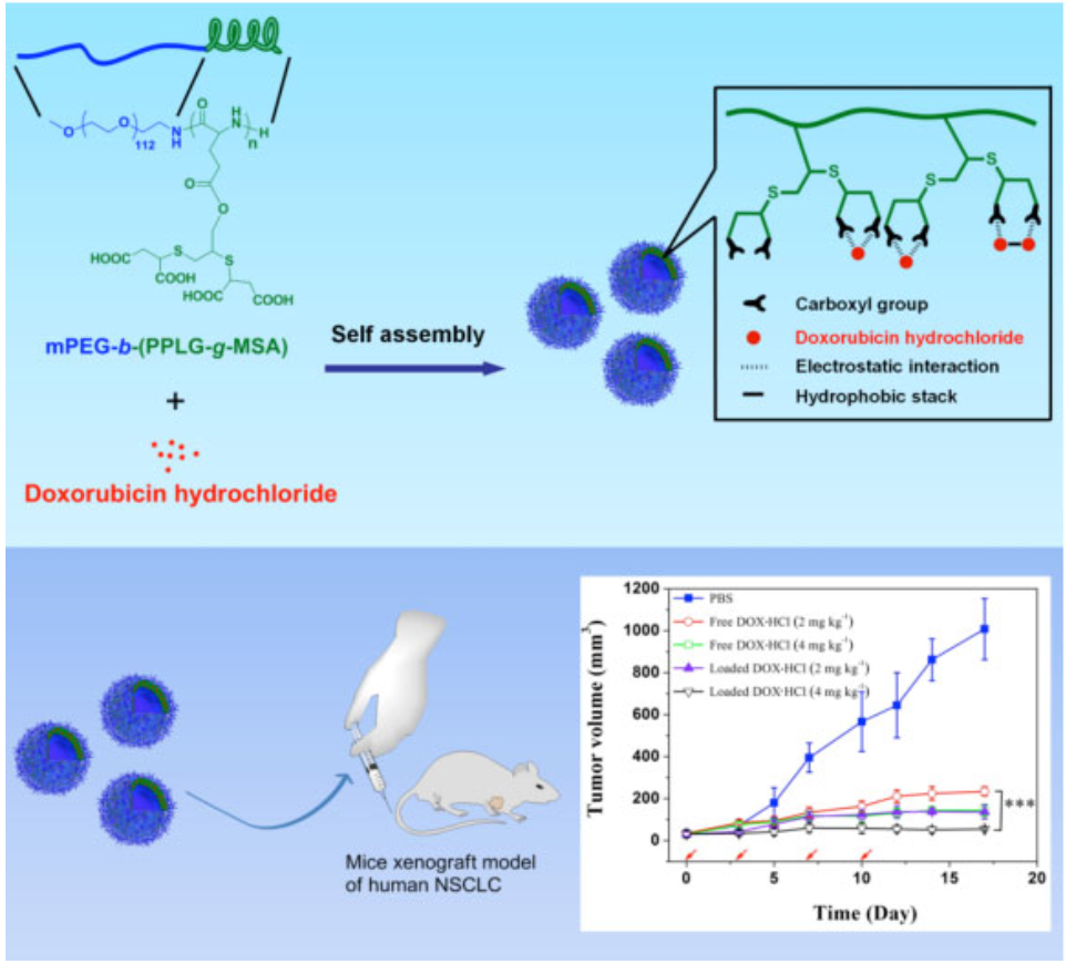 Polypeptide/Doxorubicin Hydrochloride Polymersomes Prepared Through Organic Solvent-free Technique as a Smart Drug Delivery Platform